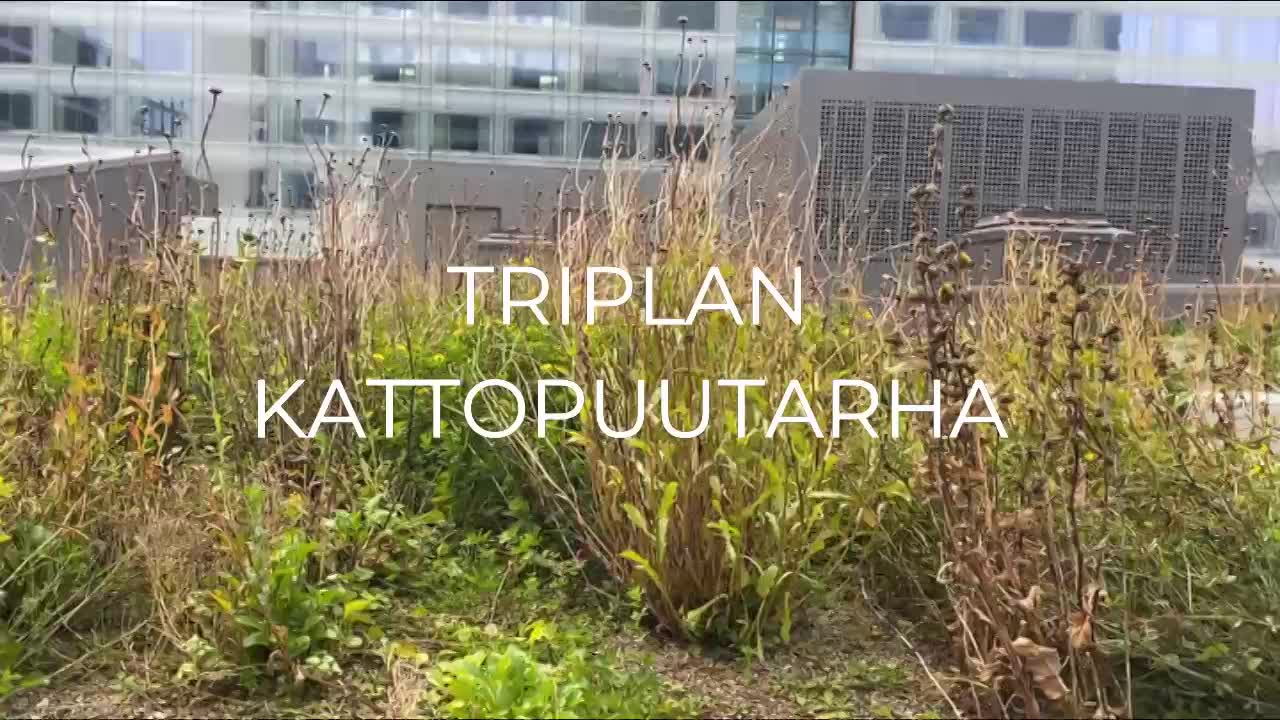 Tutustu Triplan kattopuutarhaan